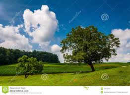 beautiful partly cloudy summer sky trees and farm fields