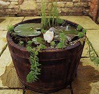 Half Barrel Planter by Half Barrel Pond Plantlove Pinterest Garden Ponds Garden