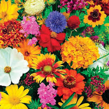 roll out flower garden butterfly and hummingbird garden roll out flowers walter