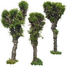 texture tif tree trees decorative