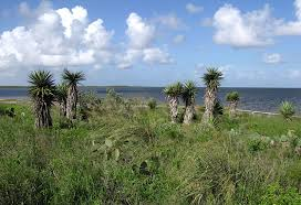 Texas vegetaion images South texas coastal wetlands jpg