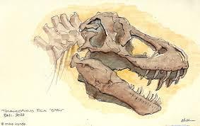 dinosaur fossil sketch by allosaurilium on deviantart