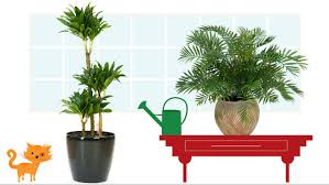 cat friendly house plants 9985