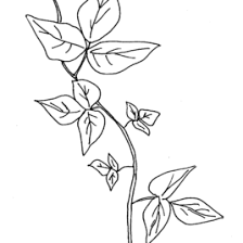 vine leaf coloring page kids drawing and coloring pages marisa