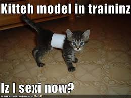 Meme Sexi - kitteh model in traininz iz i sexi now i can has cheezburger