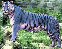 shukernature tiger tiger burning blue