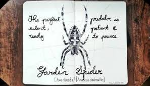 sketch of the day no 824 in my moleskine art journal spider u2013 the