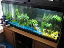 64 best fishtank ideas images on fish tanks aquarium