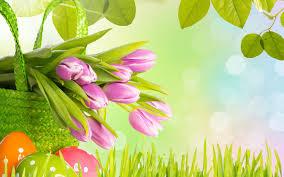 easter tulips wide desktop background wallpaper free adorable