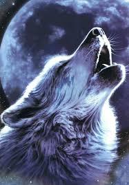 australian shepherd howling best 25 wolf moon ideas on pinterest wolf howling moon of the