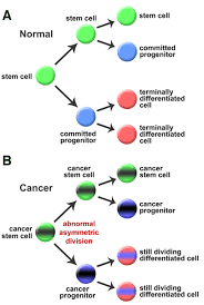 cell polarity and cancer u2013 cell and tissue polarity as a non