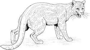 coloring pages jaguar inside page glum me