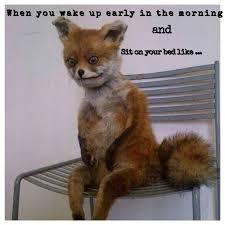 Stoned Dog Meme - top funny stoner dog memes daily funny memes