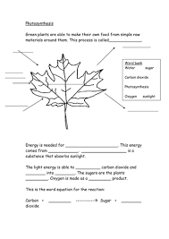 photosynthesis worksheet by hazcard teaching resources tes