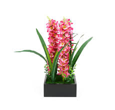 buy pink dragon potted plant home by nilkamal black online