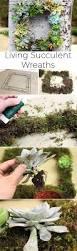 best 25 succulent garden diy indoor ideas on pinterest