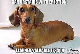 Wiener Dog Meme - daschund dilema doxies pinterest meme and dachshund