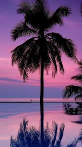 Palm Tree Wallpaper Download Wallpaper 750x1334 Palm Trees Night Silhouettes Iphone