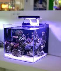 led lights for coral tanks led light coral grow marine reef tank white blue aquarium fish tank