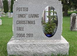 rip almost potted living tree 2004 2011 is a plastic