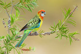 birds parrots branches animals colored background