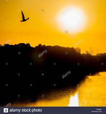 Sunset Orange by Silhouette Bird Flying Over Lake Against Orange Sky During Sunset