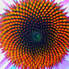 fractal pattern in nature the fibonacci numbers and golden section in nature 1
