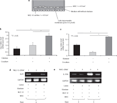 paracrine factors of multipotent stromal cells ameliorate lung