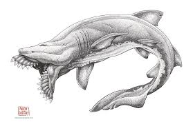 the delicate art of illustrating ancient sharks atlas obscura