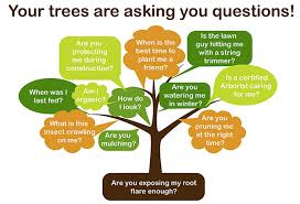 simple tips to keep your trees healthy in 2015