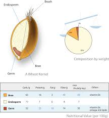 cereal germ wikipedia