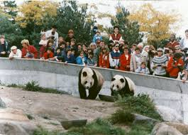 get ready for thanksgiving get ready for panda monium lovable bears will arrive next year