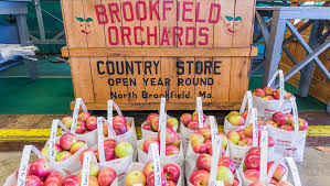 where to pick your own apples in central massachusetts discover