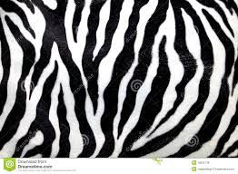 zebra pattern free download zebra pattern stock photo image of element animal popular 16025708
