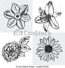 vector of lily daisy and rose narcissus flower sketch vector