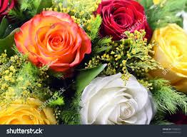 Different Color Roses Bouquet Different Color Roses Stock Photo 77083525 Shutterstock