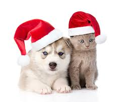 wallpaper husky kitty cat cats dogs new year two winter hat animals