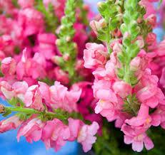 wholesale fresh flowers premium fresh cut wholesale flowers wholesale florist