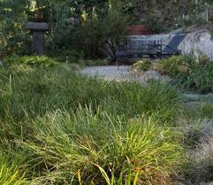 native plants melbourne native lawn grass dunneiv org
