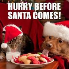 Christmas Dog Meme - merry christmas dog meme quotes for all