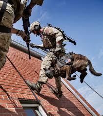 belgian shepherd navy seals cry u0027havoc u0027 and let slip the dogs of war rebrn com