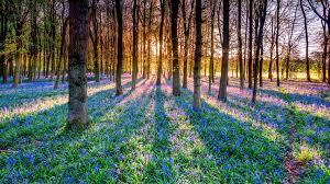 Flowers Direct 100 Flowers Direct Sunlight Hidden Valley Hibiscus Sun