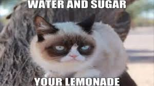 Grumpy Kitty Meme - grumpy cat memes for kids youtube