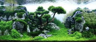 Aquascape Designs Inc Competitive Aquarium Design The Most Beautiful Sport You U0027ve