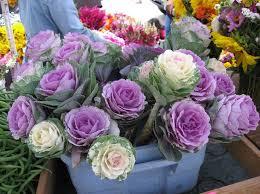ornamental kale flowers edible the secret garden flowers