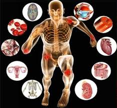 Chemistry In Anatomy And Physiology Intro To Anatomy And Physiology Introduction To Human Anatomy And