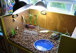 using a tote for a turtle to live in pet turtles