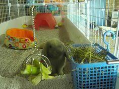 Rabbit Hutch Set Up Best Setup For An Indoor Rabbit Rabbits United Forum My Pets
