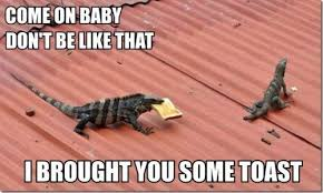 Lizard Toast Meme - come on baby dont be like that i brought you some toast weknowmemes