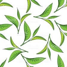 seamless pattern with green tea leaves stock vector art 651760990